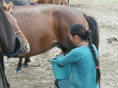 Horse Milk