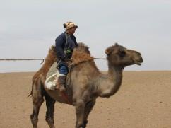 Vet on Camel